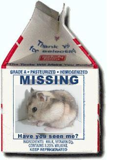 Anyone seen this hamster?